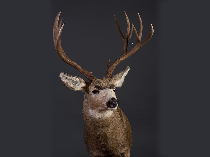 Anything That Moves Taxidermy Images